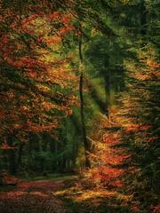 Shine (marcelkraijo) Tags: sunbeams light trees woods nature forrest autumn colors rays fall