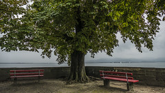 A 2, aussi... (Fred&rique) Tags: photoshop lumixfz1000 hdr raw allemagne lindau baviere bateaux arbre bancs lac bodensee rouge vert