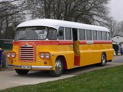 312 YUK Bedford QL - Malta Bus (Ray's Photo Collection) Tags: detling bus 312yuk bedford malta transport show classic car coach lorry hgv lkw maidstone kent countyshowground ql maltese