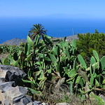 La Gomera (Spain's Canary Islands) - a cactus garden @ West Coast thumbnail