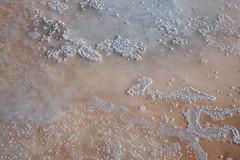 Fleur de sel (Caitlin Sea Jones) Tags: travel cahuil chile sea seasalt mar saldemar naturaleza nature peach white color textura texture viajar