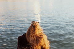 Xana with golden hair (velvet shell) Tags: film photography 35mm analogue girl golden water sunset light people canon t50 kodak db color