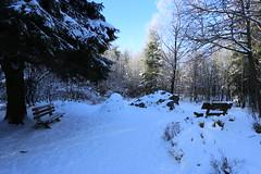 IMG_0224 (rudolf.brinkmoeller) Tags: eifel wandern natur eifelsteig hohesvenn kaiserkarlsbettstatt
