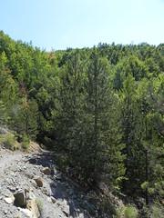 DSCN9572 (Gianluigi Roda / Photographer) Tags: apennines latesummer summer 2012 mountains geologicalevidences geologicaloutcrops trees rocks landscapes appenninobolognese crocedeicolli