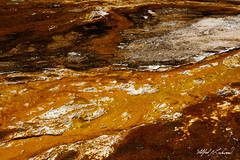 Golden River_27A0666 (Alfred J. Lockwood Photography) Tags: alfredjlockwood nature abstract color texture blacksandbasin yellowstonenationalpark noon summer wyoming microbialmat geothermalrunoff thermophiles extremophiles