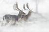 'Fallow Fantasia' (Jonathan Casey) Tags: winter norfok d810 400mm f28 vr nikon