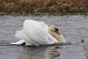 DSC05169 (evilmeth) Tags: czerwony swan pentacon 2004