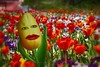 Frühling- Spring (Maxum1201) Tags: frühling spring tulpe