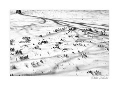 A minimal winter scene (PeteZab) Tags: winter snow light shadow nature almostspring new growth minimal season bw blackandwhite peterzabulis petezab nottingham woodthorpepark uk