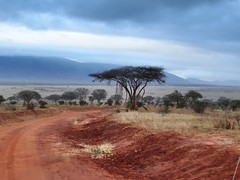 Tsavo East (HeikeFranke) Tags: tree safari africa kenya tsavoeast