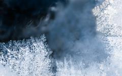 Winter spirit (TribeChristal´s) Tags: lumi pakkanen talvi winter snow frost spirit closeup finland blue cold macrophotography sonyalpha sonyilce sonyarii minolta minolta100mm minoltamacro minoltaphotography sony