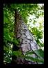 Duke Gardens July 2015 9.47.48 PM (LaPajamas) Tags: nc flora dukegardens gardens