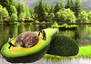 Have an Avacado (linda16_thomson) Tags: avacado minituremen lochan composite