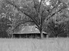 Homestead (macromary) Tags: 120 120film analog florida pentax6x7 mediumformat foma fomapan fomapan100 blackwhite analogphotograph bokeh bw blackandwhitefilm filmcamera film mechanicalcamera vintage vintagecamera 75mm f45 landscape old cracker farmhouse lafayettecounty oldflorida