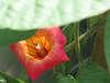 Hiding in Plain Sigtht (soniaadammurray - Off) Tags: digitialphotography flowers macro nature cliche hcs clichesaturday exterior artchallenge
