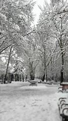 cpt_1517168671022 (afs.harp) Tags: tree trees tehran snow nice beautiful dream