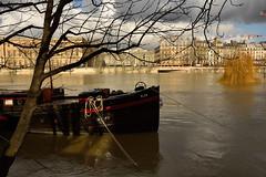 Paris /  Flood of the Seine  -2- (Pantchoa) Tags: paris seine eau crue crue2018 inondation arbre bateau elsa péniche façades architecture amarrage cordes cables nuages france quaideconti elza