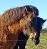 together (mama knipst!) Tags: pferd horse cheval cavallo tier animal eifel