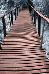 Infrared Cahuita National Park (298) (Beadmanhere) Tags: costa rica cahuita national park infrared