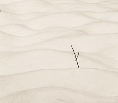 Snow curves III (MortenTellefsen) Tags: 2018 februar monochrome snow curves bw blackandwhite blackandwhiteonly winter white svarthvitt artinbw art minimalism monocrome bnw abstract norway nature norwegian natur norsk