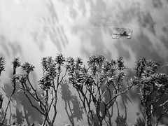 Unrealscape (Shahrear94) Tags: cellphone black white contrast unreal shadow dhaka tree miniature bnw xiaomi concept morning paper news plane plant planet sticked sunbeam