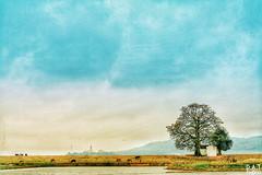 IMG_2859-01 (PhantOm_96) Tags: quê nhà cây gạo nước sông núi canon 5d 50mmstm 50mm f18 phong cảnh