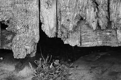 PUERTAS CON ENCANTO (Luis Manuel C.) Tags: puerta puertas door doors madera blackandwhite blancoynegro blancetnoir bn bnw bw blackandwhitephoto blackandwhitephotography bnwphotography