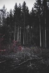 Nr.250 (Silvan Erne) Tags: dark fujifilm xt1 wood forest nature morningwalk hiking bleak morning trees landscapephotography landscape