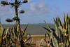 Cadix (hans pohl) Tags: espagne andalousie cadix nature plantes atlantique océan clouds nuages