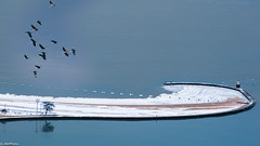 Flocking out of here 12.28.17 (jnhPhoto) Tags: jnhphoto migration lakemichigan cold snow gose geese