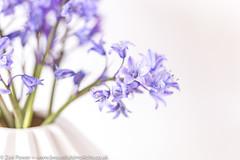 Bluebell simplicity (Zoë Power) Tags: simplicity flowers spring mygarden vase natureindoors bluebells purple