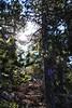 Atalanti Trail  (140) (Polis Poliviou) Tags: walking hiking path trail park atalanti winter nature life white inland troodos landscape cyprustheallyearroundisland cyprusinyourheart yearroundisland republicofcyprus κύπροσ ©polispoliviou2018 polispoliviou polis poliviou πολυσ πολυβιου mediterranean tree trees fieldnicosia troodosmountains forestpark green clouds cloudy 2018 leaves leaf wood wallpaper countryside snow ice freezing nationalpark pinetrees lovenature love naturepictures naturepics canon forest rocks mount mountain mountains people