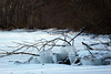 branch ice (kerwilliger) Tags: lake mendota frozen ice winter january madison wisconsin snow