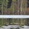 Lac du Flambeau, WI, North Woods, Lake Tippecanoe, Birch Tree Reflection and Ripples (Mary Warren 9.6+ Million Views) Tags: lacduflambeauwi northwoods nature flora plants lake water green reflection trees birchtrees leaves foliage