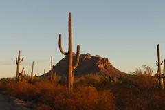 Ragged Top Mountain (lars hammar) Tags: arizona ironwoodforestnationalmonument saguaro cactus saguarocactus marana landscape