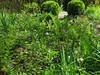 CKuchem-5959 (christine_kuchem) Tags: akelei bienenweide blüte blüten bodendecker buchs buchsbaum buchskugel eibe eibenhecke farn formschnitt garten hochbeet insekten maiglöckchen nahrung natur naturgarten nektar pflanze privatgarten schatten schattengarten selbstaussaat sommer trockenmauer vergissmeinnicht walderdbeere wildpflanze naturnah natürlich wild