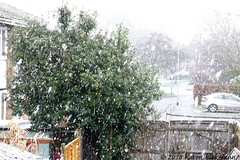 January 21st, 2018 Snow! (karenblakeman) Tags: cavershamgarden caversham uk snow tree january 2018 2018pad reading berkshire