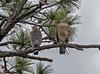 01-22-18-0000383 (Lake Worth) Tags: animal animals bird birds birdwatcher everglades southflorida feathers florida nature outdoor outdoors waterbirds wetlands wildlife wings