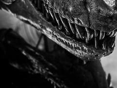 T. Rex Teeth NYC