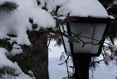 Photo exploratoire (bd168) Tags: hiver arbre lumières lampes neige couleurs fujifilmxt10 50mm