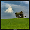 Brother from another Mother (Ilan Shacham) Tags: landscape view scenic minimalism tree cloud field green blue sky fineart fineartphotography similarity parallelism israel ruhama square