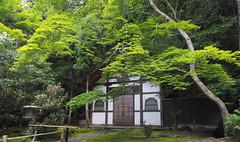 Honen-in Temple..  Kyoto (geolis06) Tags: geolis06 asia asie japan japon 日本 2017 kyoto hōnenin 法然院 honenin japon072017 olympuspenf olympusm918mmf4056 bouddhiste bouddhisme jardin garden