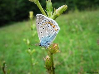 Butterfly 1605