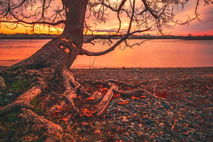 BK's Spot (PNW-Photography) Tags: sunrise red colorful colors richland kennewick pasco tricities columbiariver river reflection washington sonya6000 sony rokinon lesliegrovepark tree rocks shore water waterscape