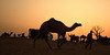 Pushkar Evening (Swaranjeet) Tags: swaranjeet singh photographer thane mumbai