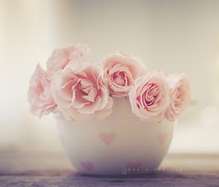 My favorites, wild rose