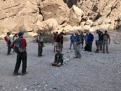 2018-02-15 GOPS Geology Hike (114) (MadeIn1953) Tags: 2018 201802 20180215 greatoutdoorsgo go gops greatoutdoorspalmspringsgops hiking california coachellavalley riversidecounty meccahills paintedcanyon laddercanyon geologywalk