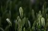 Wild Grass (maytag97) Tags: maytag97 nikon d750 tamron 150600 150 600 grass contrast shadow shade mood dof bokeh seed nature natural