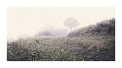 Old farm lane (memories-in-motion) Tags: feldweg eifel vulkaneifel eifelsteig farm lane gras green brown mood mist fog tree panorama path sigma dp1 merrill foveon autumn nature