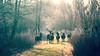 Morning light ... (Alex Verweij) Tags: deer alexverweij canon 5d morning morninglight light lichtval tegenlicht hert herten edelhert stag gewei natuur nature wild edelherten oostvaardersplassen almere pad green groen licht walking wandelen